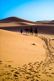 Camel trekking Morocco. Dawn in the Dunes of the Erg Chebbi Merzouga Royalty Free Stock Images