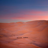 Camel trekking in Sahara, Morocco Royalty Free Stock Photos