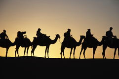 Camel trekking tours in the desert - dromadaires safary Stock Photo