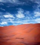 Camel trekking in Western Sahara, Morocco Royalty Free Stock Image