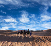 Camel trekking in Western Sahara, Morocco Royalty Free Stock Photography