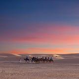Camel trekking in Western Sahara, Morocco Stock Photos
