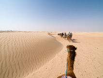 Camel Trip. In Tunisia on Sahara Royalty Free Stock Photos