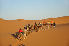 Camel trip in Sahara desert Stock Images