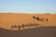 Camel trip in Sahara desert Stock Photography