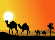 Camel trip silhouette Royalty Free Stock Photos