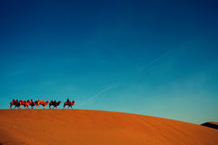 Camel troop alone in the desert Stock Photos