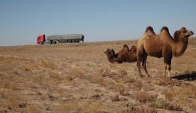 Camel and truck Royalty Free Stock Photos