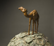 Camel on US currency Royalty Free Stock Photography