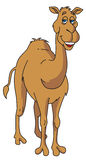 Camel vector Royalty Free Stock Image