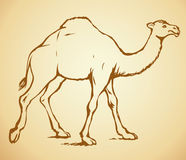 Camel. Vector sketch Royalty Free Stock Images
