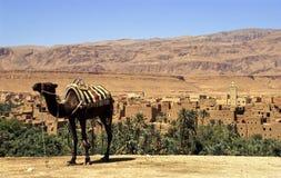 Camel waiting Royalty Free Stock Photo