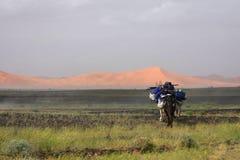 Camel walk in a desert landscape Royalty Free Stock Photos