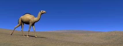 Camel walking - 3D render Royalty Free Stock Photography