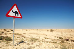 Camel warning sign Stock Images
