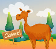A camel with a wooden signboard Royalty Free Stock Image