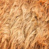 Camel wool Royalty Free Stock Images