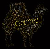 Camel of words Stock Photos