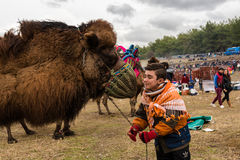 Camel wrestling in Selcuk Arena, Camel wrestling is popular tourist attraction in Turkey Stock Photo