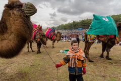 Camel wrestling in Selcuk Arena, Camel wrestling is popular tourist attraction in Turkey Royalty Free Stock Image