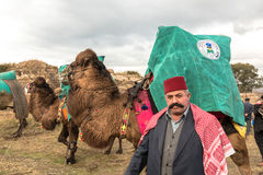 Camel wrestling in Selcuk Arena, Camel wrestling is popular tourist attraction in Turkey Stock Photos