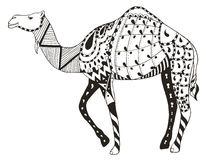 Camel zentangle stylized, vector, illustration, freehand pencil Royalty Free Stock Photos