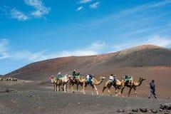 Camelcade on Lanzarote Stock Photos