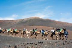 Camelcade on Lanzarote Royalty Free Stock Photo