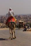 Cameleer和骆驼在吉萨棉金字塔,开罗在埃及 库存照片