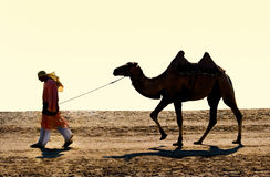 Cameleer. The drover with a camel go on wilderness Stock Photos