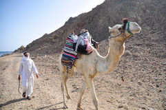 Cameleer. Is leading his camel in the stone desert Royalty Free Stock Image