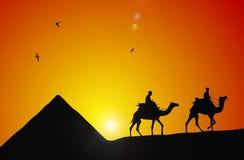 Cameleer Stock Image