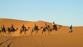 Cameleer with camel caravan in desert stock photo