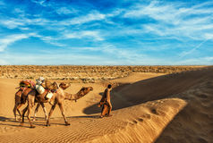 Cameleer camel driver with camels in dunes of Thar stock image