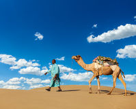 Cameleer (camel driver) with camels in Rajasthan, India stock photo