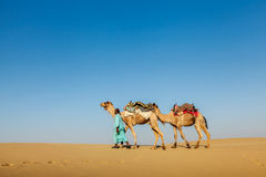 Cameleer (camel driver) with camels in Rajasthan, India Royalty Free Stock Image
