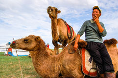 Cameleer and Camels In Mongolia Royalty Free Stock Images