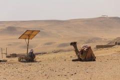 Cameleer en kameel en woestijnmening bij gizapiramide, Kaïro in e Stock Foto