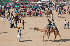 Cameleer entretiene a niños con los camellos durante el festival rural del desierto Fotos de archivo libres de regalías