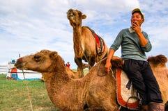 Cameleer et chameaux en Mongolie Images libres de droits