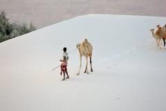 Cameleer nelle dune di sabbia bianche Fotografia Stock