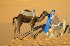 Cameleer preparing camel for the ride Royalty Free Stock Photos