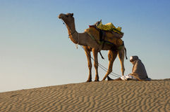 Cameleer at the Sam Sand Dune, Thar Desert Stock Image