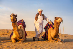 Cameleer stand between camels Royalty Free Stock Photography