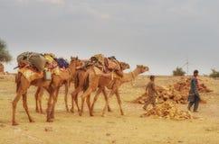 Cameleer w pustyni Zdjęcia Stock