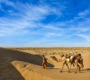 Cameleer (wielbłądzi kierowca) z wielbłądami w diunach Thar pustynia. Raj Obrazy Royalty Free