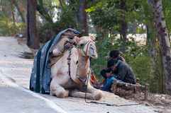 Cameleers with camel wait for tourists Stock Image