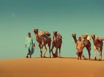 Cameleers mit Kamelen in der Wüste - Weinleseretrostil Stockfotografie