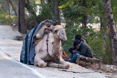 Cameleers z wielbłądem czekać na turystów Obraz Stock
