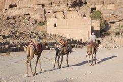 cameles有蓬卡车 库存图片